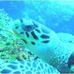 turtle-150x150