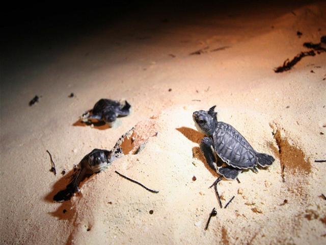 riviera-maya-tortuga-marina