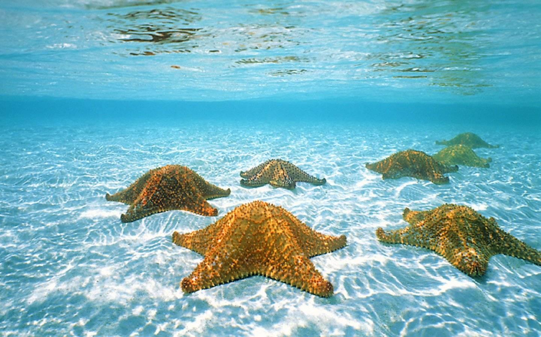 Estrellas de mar en El Cielo de Cozumel.