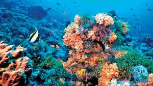 arrecife-222