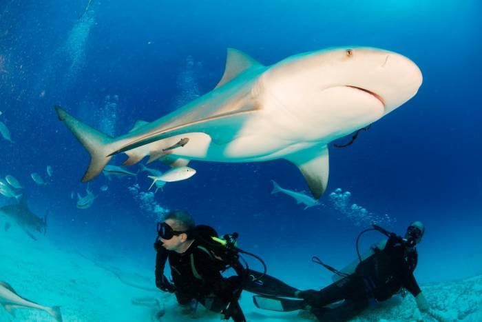 tiburones riviera maya