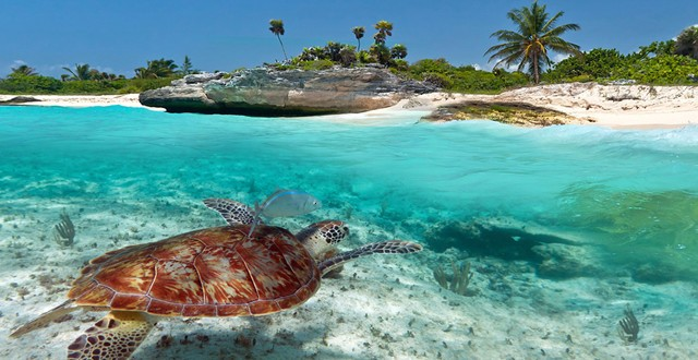 akumal-riviera-maya-tortugas
