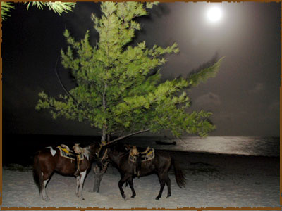 Horseback Riding Riviera Maya