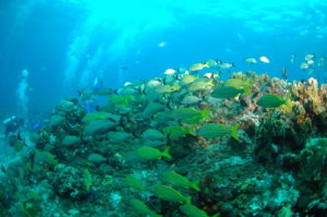 National Reef Park of Puerto Morelos