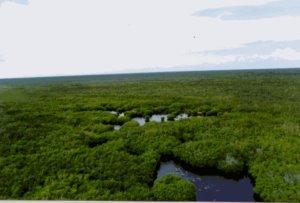 Circuito Ultra de la Selva Cozumel