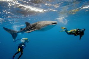 Holbox, from May to October you can also swim with whale sharks