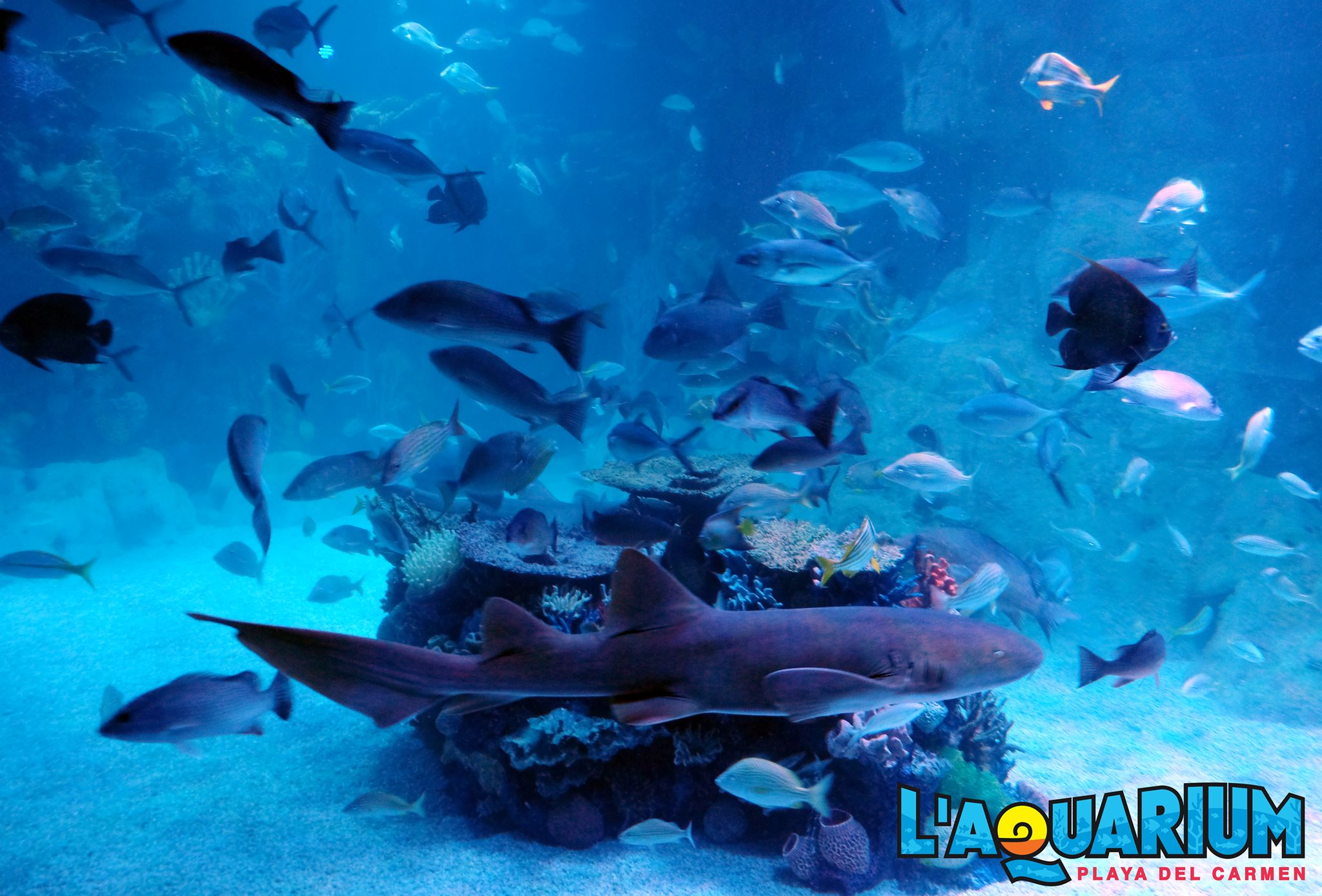 l aquarium in playa plunges visitors the sea