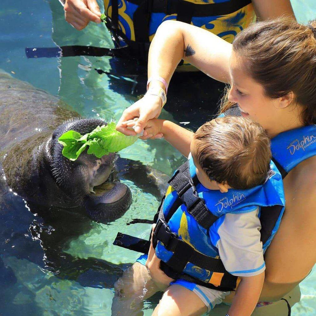 Encuentro-con-delfines-cozumel-dia-del-nino
