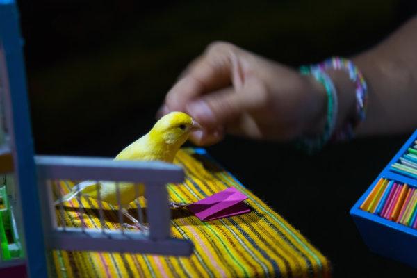 Pajarito de la suerte en Riviera Maya