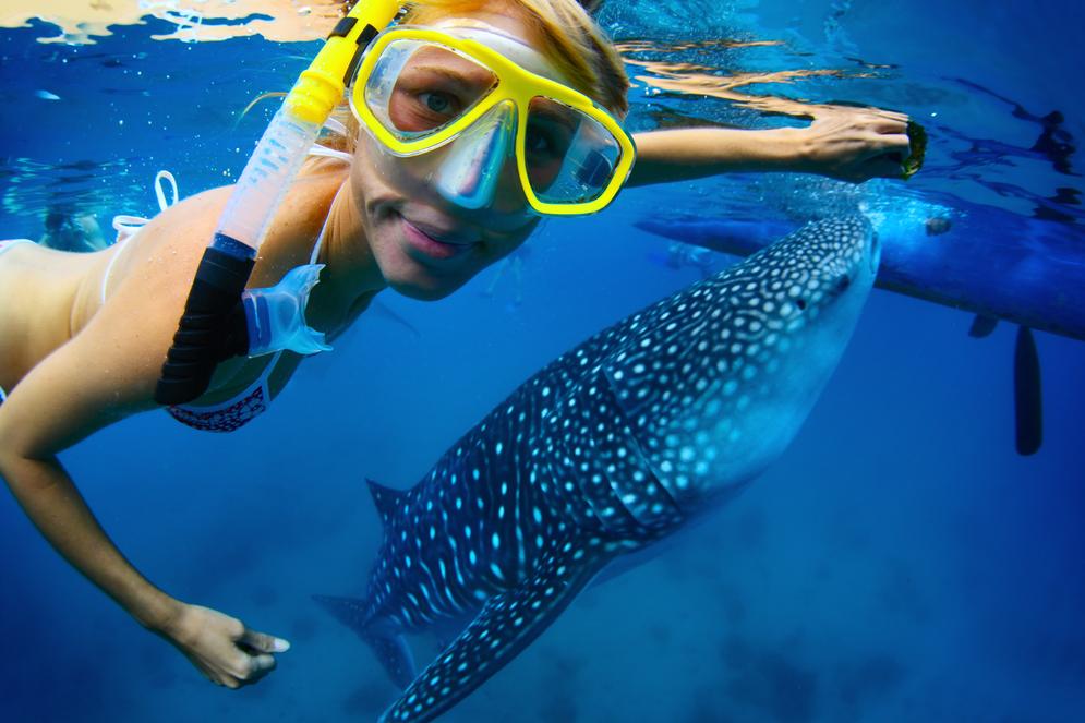 tipos de vacaciones para chicas en riviera maya nado con tiburones